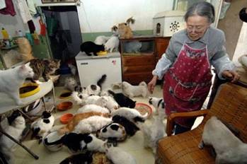 "Reports Of China Sending Cats To ""Death Camps"""