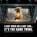 Dog in Hot Oven