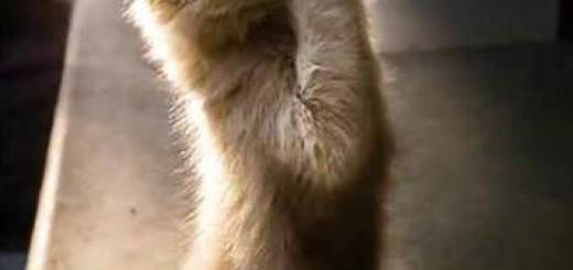 10 Surprising Cat-Care Tips