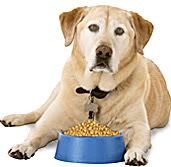 Dog Laying by Dog Food Bowl