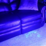 Using a Blacklight To Find Cat & Dog Urine Odor Spots