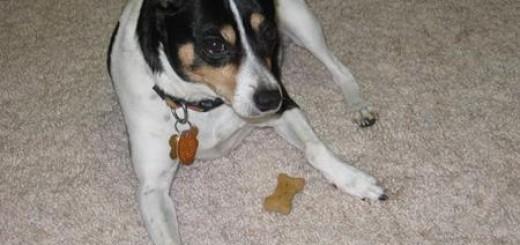 Dog with Treat