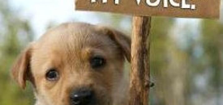 Pet Treats from China