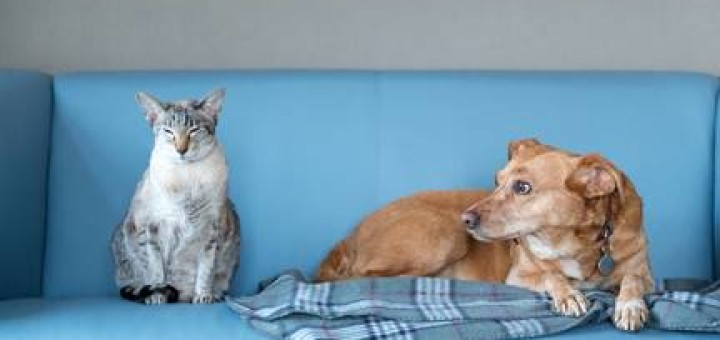 Signs Your Pet May Have a Hormonal Problem