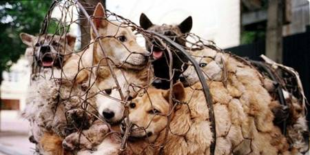 Stop China's Dog Meat Festivals